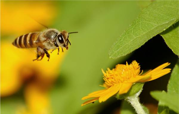 Can Anti-Social Bee Behavior Assist in Decoding Autism Symptoms