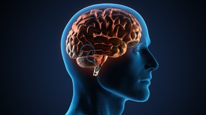 How ASD Disorders Affect the Development of the Brain