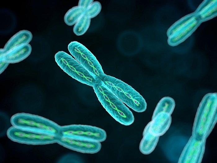 Autism and Chromosome